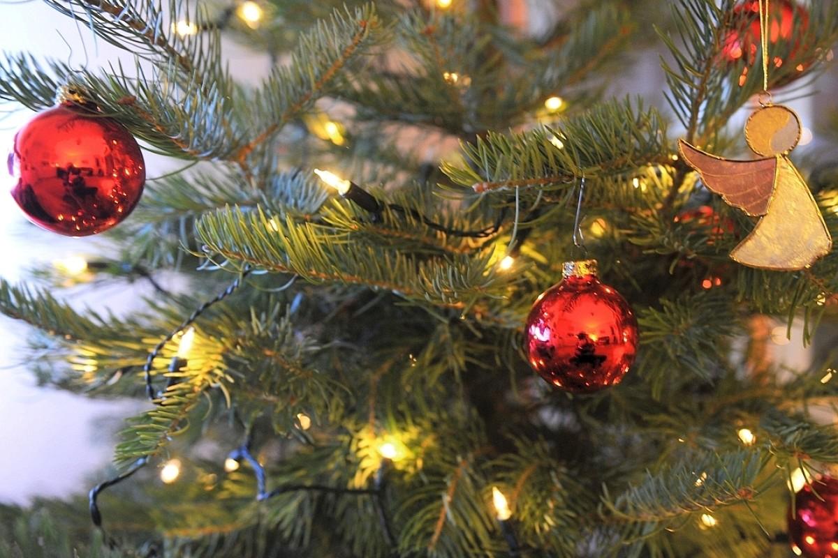 Gedicht der weihnachtsbaum spricht