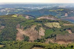Waldretter Hagen: Der Wald im Stadtgebiet Millionen Wert