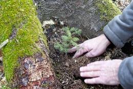 Wald in Hagen: Pflanzfest an der Hasper Talsperre