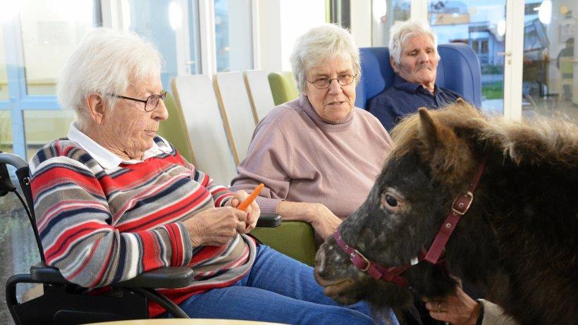 Mit Demenz leben: Ponys besuchen Haus St. Anna in Netphen - Westfalenpost
