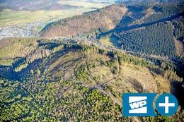 NRW und Regionalforstamt wollen Schmallenberger Wald retten