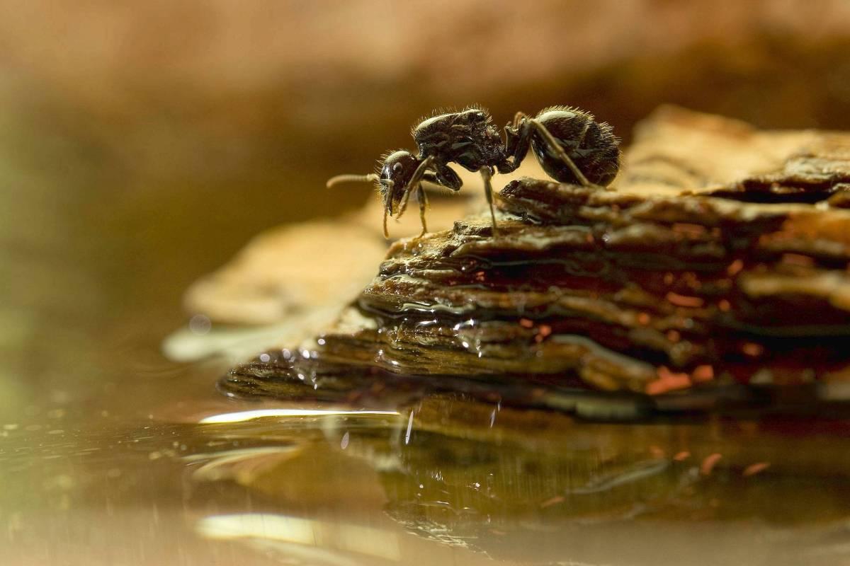 Ameisen-Sex-Videos