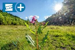 Siegen und Umgebung: Im Wald, da wächst der Freizeitspaß